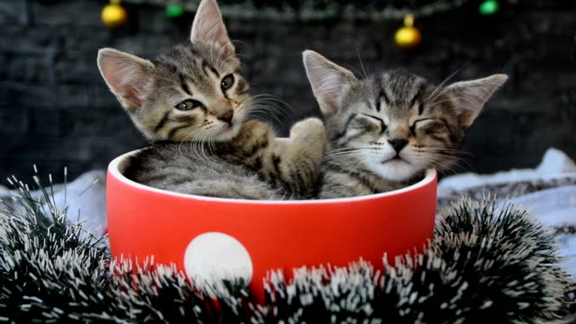 Tired kittens in a cup surrounded by Christmas decorations