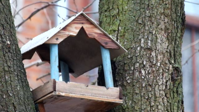 Tits fly into the bird feeder (Parus major) video