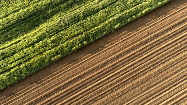 vídeos de stock, filmes e b-roll de ms para ws antena ver os campos arados rurais e culturas verdes - contrastes