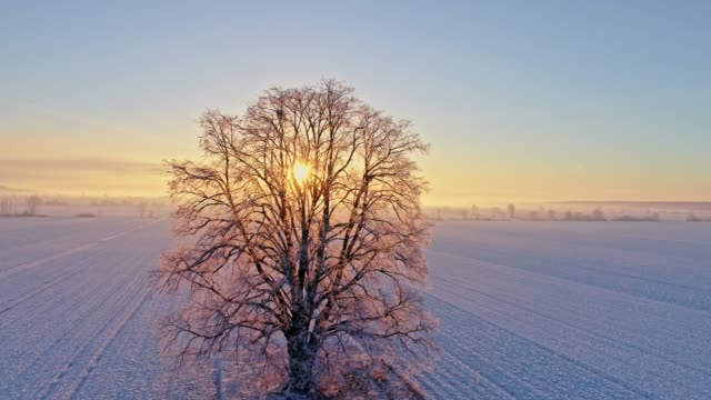 WS to MS Aerial view Sun shining behind tranquil,idyllic single tree in snow covered rural field at sunrise,Prekmurje,Slovenia video