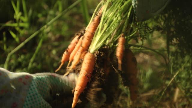vídeos de stock e filmes b-roll de to be eaten - colher atividade agrícola
