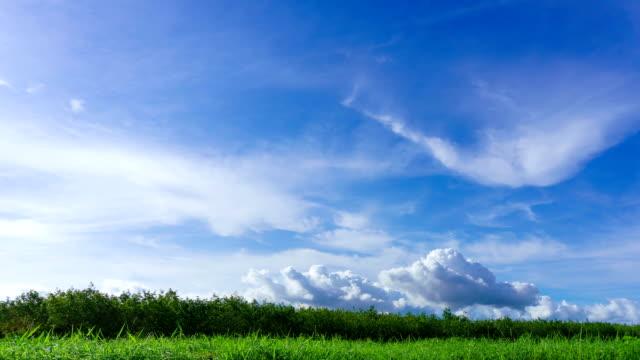 4K/UHD to HD Time-lapse : Green field summer landscape. video