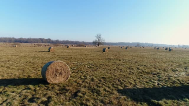 MS to WS Rolled hay bales in sunny,idyllic field Rolled hay bales in sunny,idyllic field. Pan up,real time. hungary stock videos & royalty-free footage