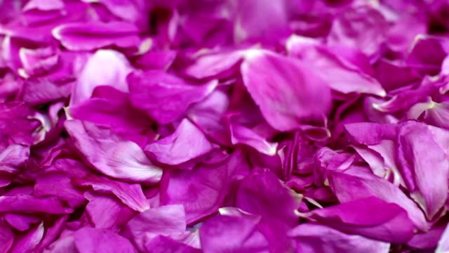 to strew petals rose video