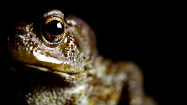 Toad Macro Close Up video