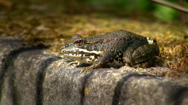 Toad sitting on moss covered well video
