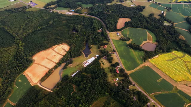 Tobacco Fields Ready to Pick video