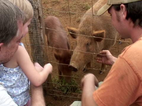 Niño pequeño, hijo de su familia y le encanta los cerdos - vídeo