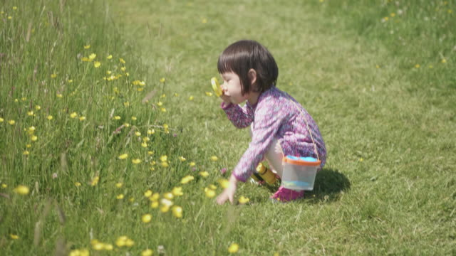 toddler girl playing in summer countryside,Northern Ireland video
