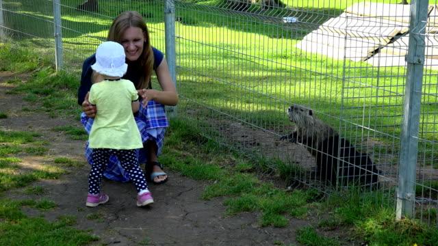 toddler girl with mother enjoy muskrat ondatra zibethicus animals in zoo video