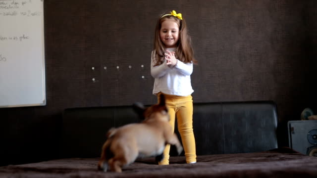 toddler playing with her french puppy - bambino cane video stock e b–roll