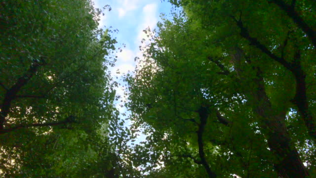 Tokyo Aoyama of the road in the morning 4K video  Tokyo Aoyama of the road in the morning ginkgo tree stock videos & royalty-free footage