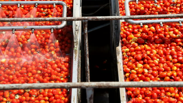 Tomato Sauce Factory video