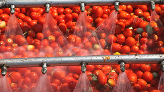 Tomatoes Tomatoes cleaning process for sauce factory sauce stock videos & royalty-free footage