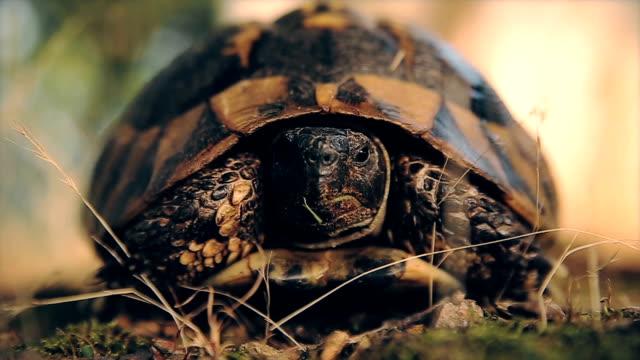 vidéos et rushes de tortue trop mignon, gros plan - tortue