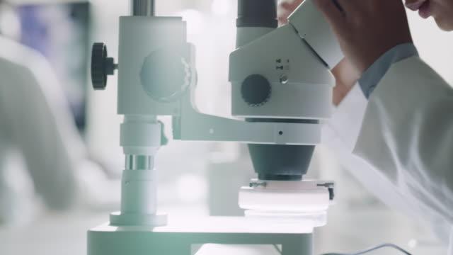 vídeos de stock e filmes b-roll de too small for the eye? thank god for the microscope! - biologia