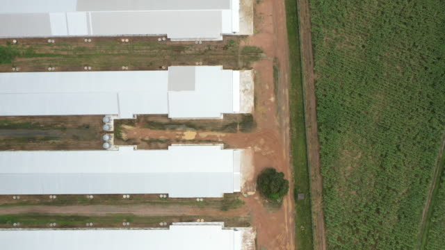 vídeos de stock, filmes e b-roll de vista aérea superior da exploração agrícola da carne - ave doméstica