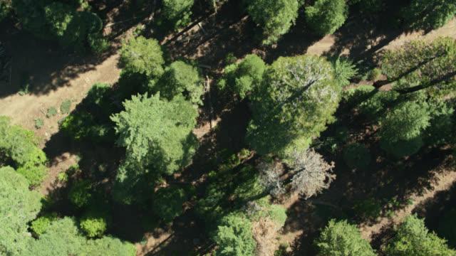 Top Down Aerial Shot of Forest Near Mt Lassen, California