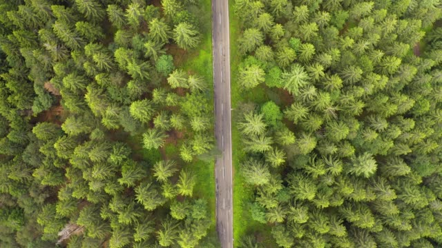 top down aerial view flying over forest road with car.green trees of woods growing both sides. car driving along forest road.overhead aerial:car driving through pine forest.germany black forest aerial - pezze di stoffa video stock e b–roll