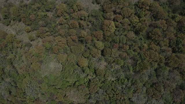 Top down drone shot of dense forest video