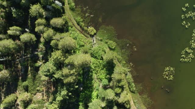 Top Down Drone Shot of Shore of Salmon Lake, California