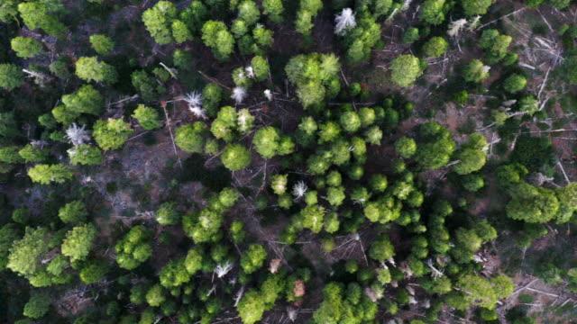 Top down of trees in Lake Tahoe