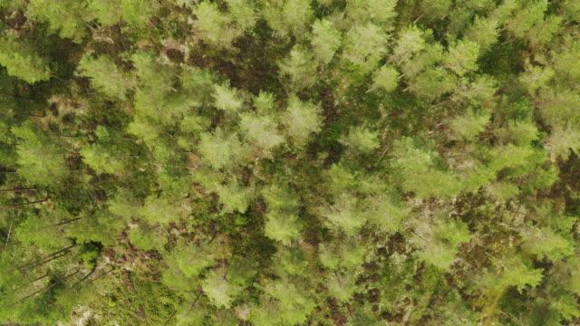 uppifrån och ned i en skog i sverige - pine forest sweden bildbanksvideor och videomaterial från bakom kulisserna