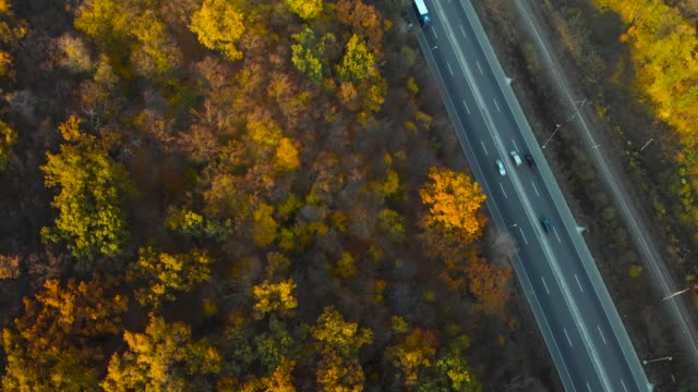 Top down view of autumn road car at autumn day video