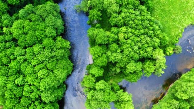 vidéos et rushes de vue descendante de la forêt verte et de la rivière bleue - haut