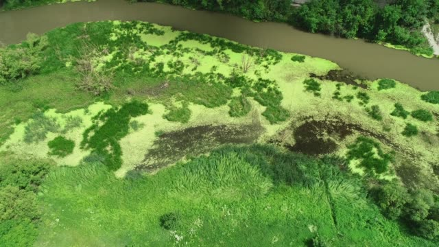 Top down view of the lush green swamp and dirty river. 4K.