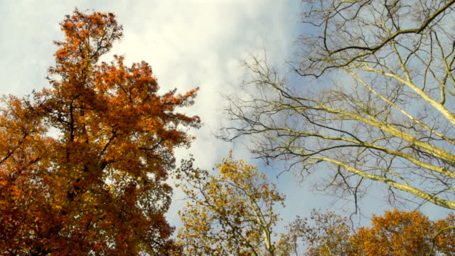 Top of the trees in autumn video