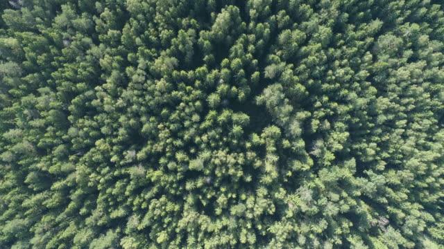 vídeos de stock e filmes b-roll de 4k top view  above aerial forest - letónia