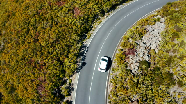 4k top view aerial drone footage of a white economy car driving by the asphalt road leading in the yellow forest on madera island, portugal. safety transport concept uhd tv video. - top filmów i materiałów b-roll