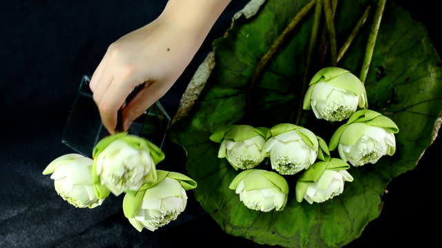 top view : arrange a lotus in a glass vase video