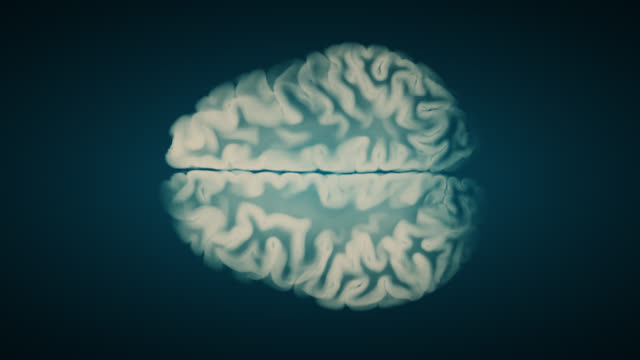 Top View Brain On Blue Background. Neurological Diseases, Tumors And Brain Surgery