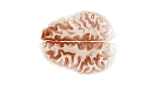 Top View Brain On White Background. Neurological Diseases, Tumors And Brain Surgery