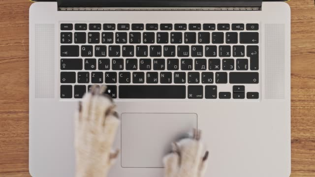 Top view dog paws using touchpad on laptop and texting rapidly on keyboard new mail or message on chat or social feed. Funny concept or freelance work in the office, pet life and routine workplace