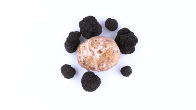 top view from above of one large white and few black truffles. slowly rotating on the on the turntable. isolated on the white background. closeup. macro. - alta moda italy video stock e b–roll
