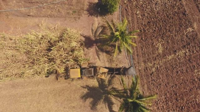Top View, Harvesting Machine on Sugar Cane Farm Plantation, Aerial View