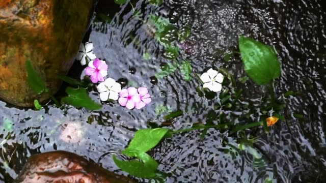 Top view of a pond in a rock garden. Water flowing with pink flowers.