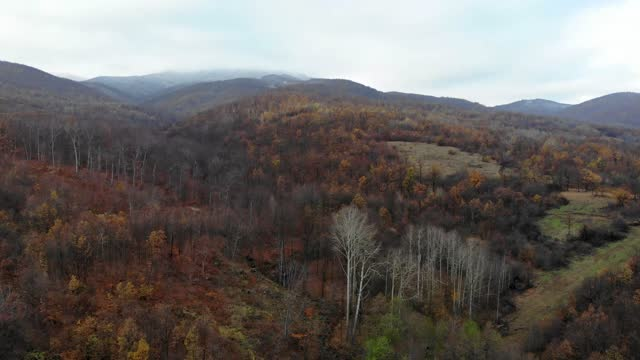 Top view of autumn deciduous forest - View of autumn bright forest color in eastern Serbia - 4K drone shot - Aerial view: flying above beautiful autumn forest