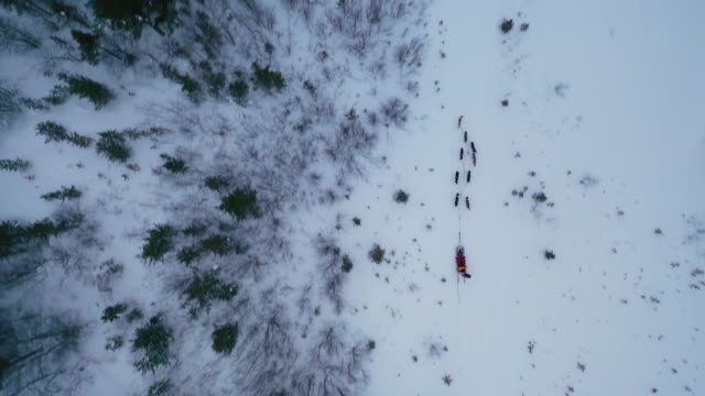 top view of dog sledding on deep snow with copy space - cane husky video stock e b–roll
