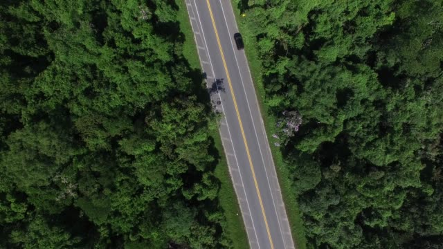top view of highway in a forest - south america travel stock videos and b-roll footage