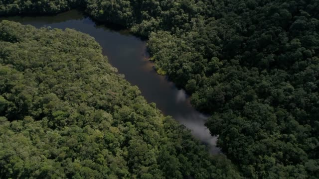 Top View of River in Rainforest video