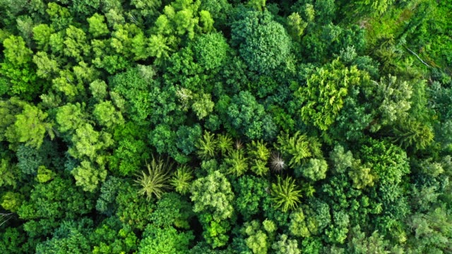 stockvideo's en b-roll-footage met hoogste mening van slingerende bomen op wind in polen - bovenkleding