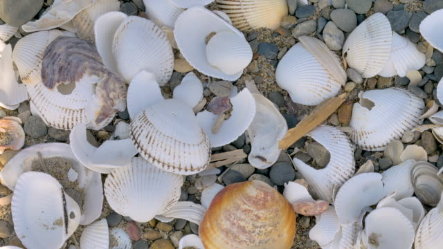 Top view of the broken shells on the rocky sand Top view of the broken shells on the rocky sand on the shoreline of the beach animal shell stock videos & royalty-free footage