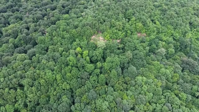 Top view of the motocross track in the forest.