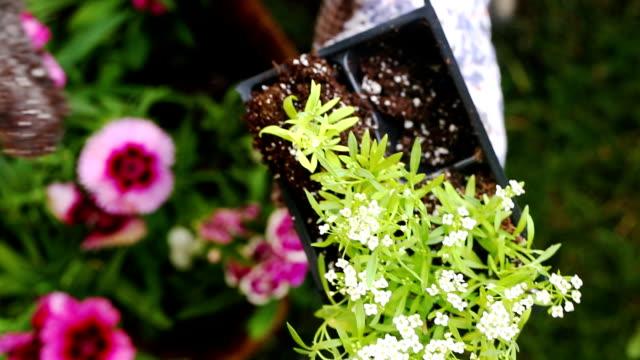 Top View Placing Flower in Basket video