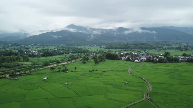 ansicht terrassenreisfeld nordthailand - strohhut stock-videos und b-roll-filmmaterial
