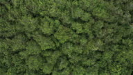 istock Top view zoom out of rainforest and wind 1171748220